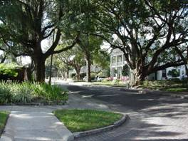 photo of tree-lined street in Plant City